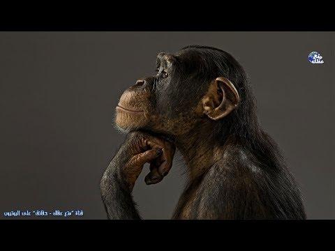 حقائق مذهلة لا تعرفها القرد - القرود أذكى الحيوانات على الأرض !!