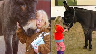 Little girl came to this donkey and hugged him. A few moments later a miracle happened!