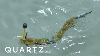 A robotic eel that sniffs out pollution