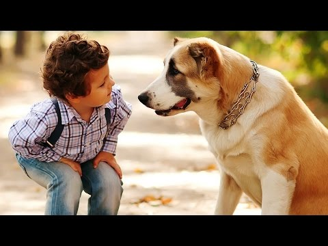 Dog Daycare / Dog Insurance / Cheap Pet Insurance
