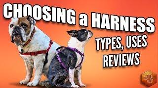 видео harnesses for pitbulls