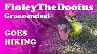 FinleyTheDoofus Groenendael puppy goes hiking