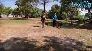 Ch_sabah Dog Training.[promotional Video]