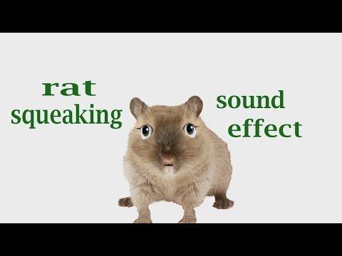 Mouse Squeak Sound Effects Mouse Squeak Sounds
