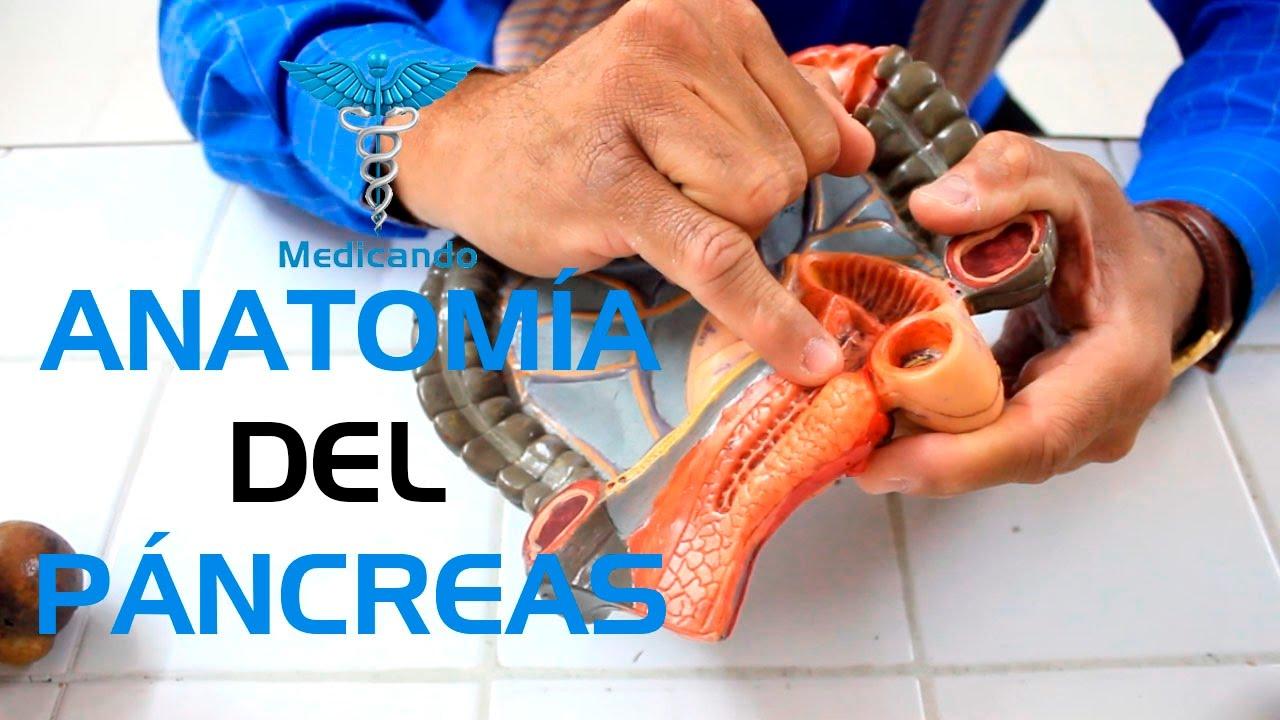 Anatomía del Páncreas - YouTube