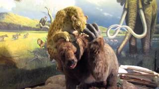 Sloth vs Saber-toothed Cat