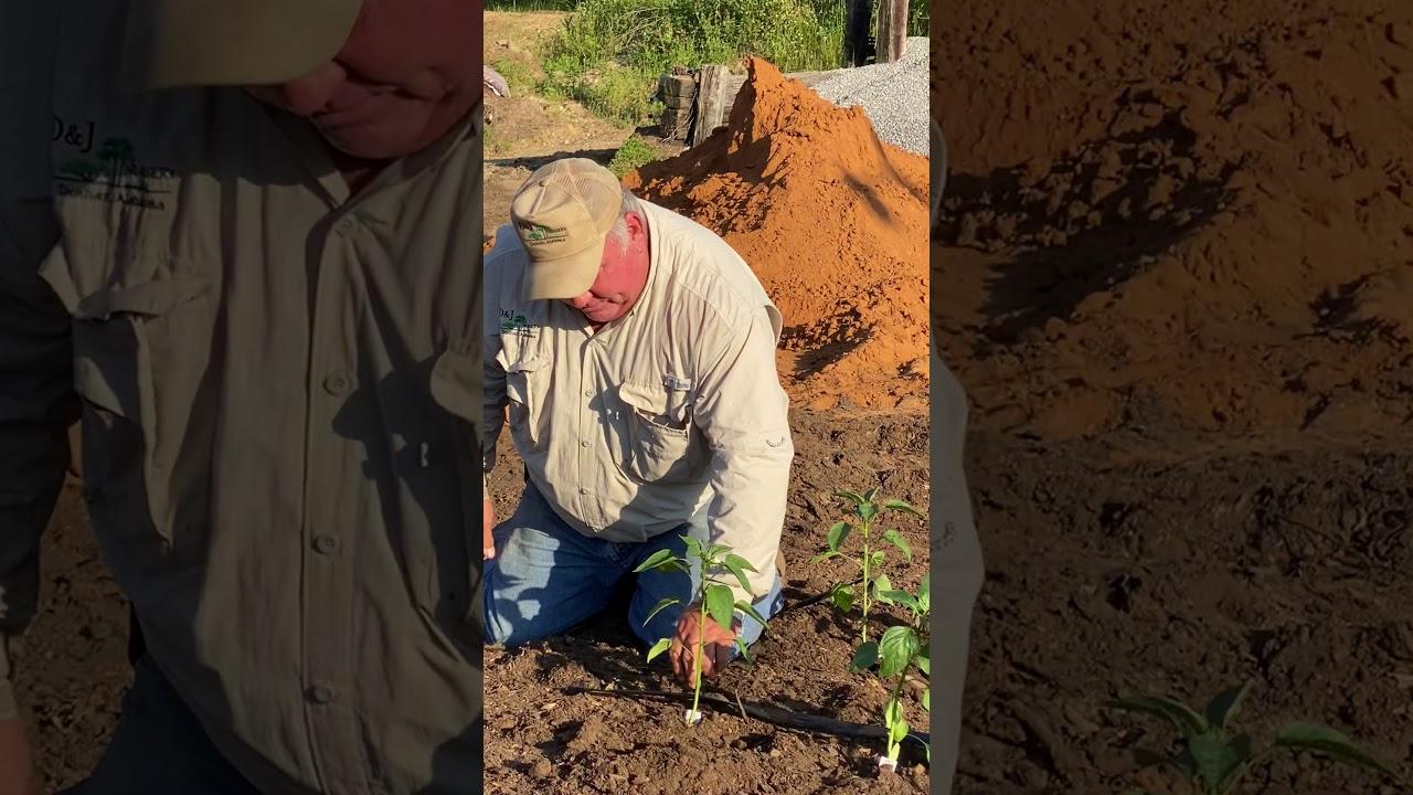 Raised Bed,Garden Soil & Irrigation