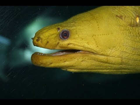 Facts: The Moray Eel