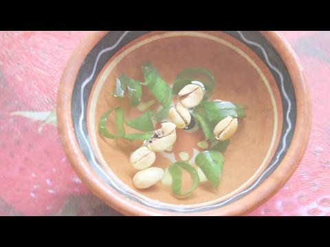Посев и проращивание семян кофейного дерева