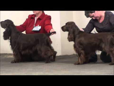 Midland counties field spaniels PG dog and dog CC