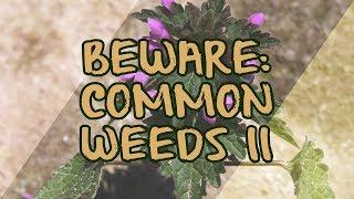 Beware: Common Weeds II