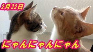 2月22日が猫の日と決まったのは1987年だって。世界各地で猫の日は制定...