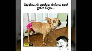 2019/01/15 Bukiye Sapa | Sinhala Facebook Joke Posts