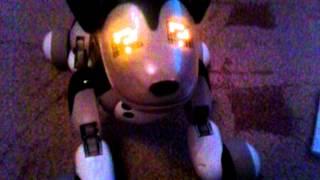 Интерактивная собака Zoomer(зуммер) Шедоу