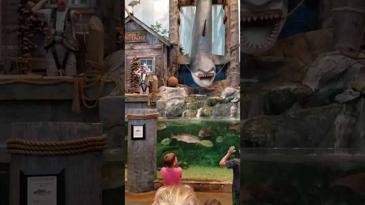 Bass Pro Shop Myrtle Beach Sc - Youtube-8264