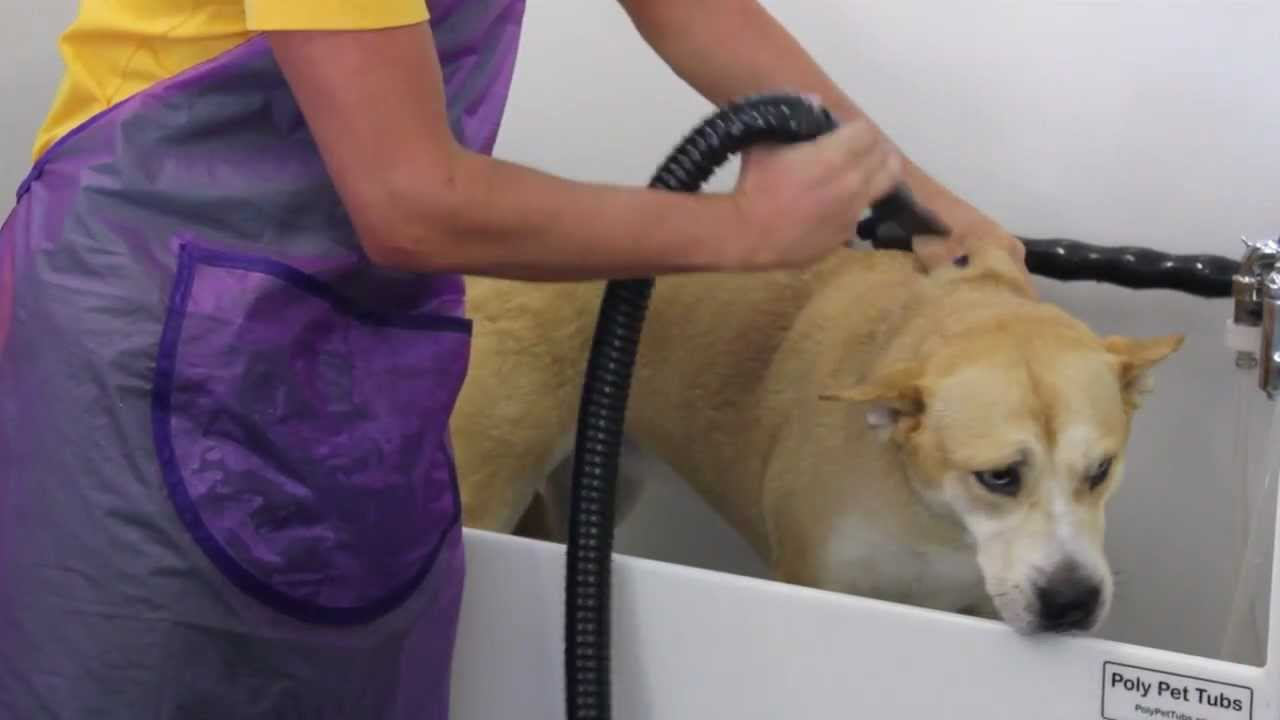 Metropup diy dog grooming at ecodog wash youtube solutioingenieria Images