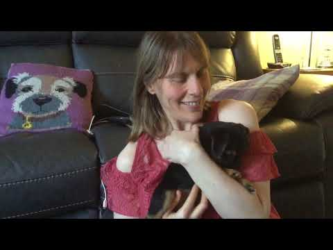 Bringing our border terrier puppy home