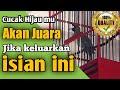 Cucak Hijau Juara  Paruh Panjang Ngunci Dan Keluarkan Isian  Mp3 - Mp4 Download