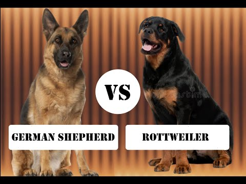 German shepherd VS Rottweiler | தமிழில் | comparison and facts | PETS ULAGAM TAMIL |