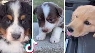 Super Happy Doggos Compilation ~ Most adorable puppy videos