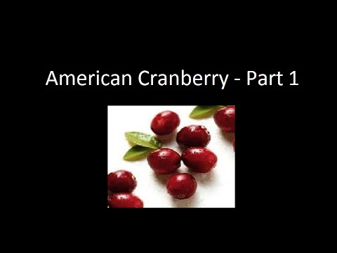Growing American Cranberry - Part 1