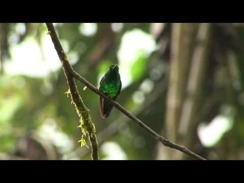 Hummingbirds, Ecuador, Bird is the Word
