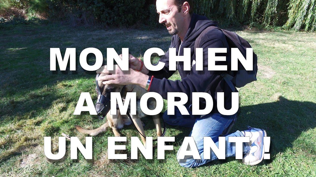 MON CHIEN A MORDU UN ENFANT ! | FunnyDog.TV