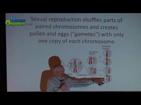 Cannabis Science Pub Feb 2016 Genetics Part 3 Dennis Todd PhD Genetics Hybrids & True Breeding Lines