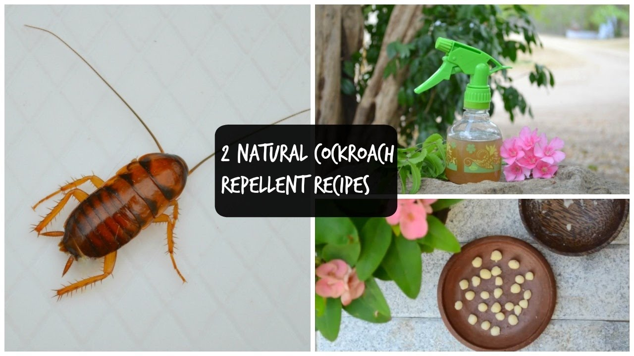 2 Natural Remedies To Get Rid Of Cockroaches In Kitchen & Home ...