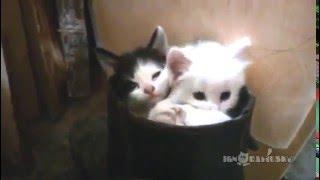 Три котёнка от РУССКАЯ ПРИРОДА