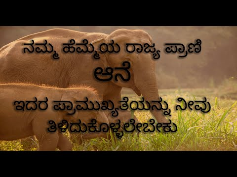 GAJA - A Short documentary on Elephant's