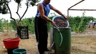 Изготовление вина  часть 1.
