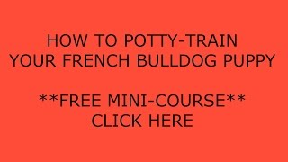 **How to Potty Train a Bulldog Puppy** A.S.A.P**-cLICK hERE