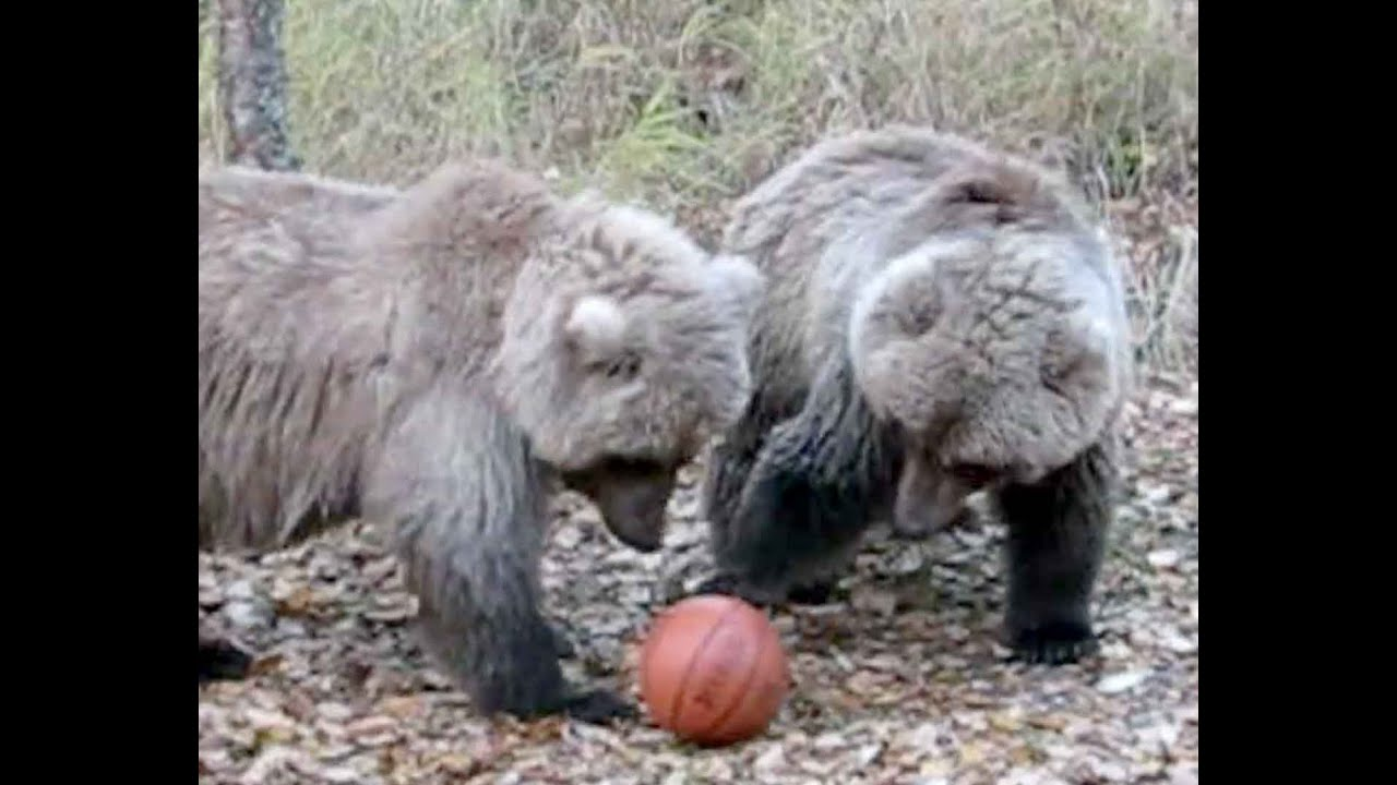 Bear Family Plays Basketball Youtube