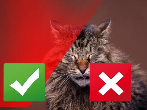 7 Common Cat Allergies