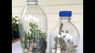 How to make Plastic Bottle Terrarium