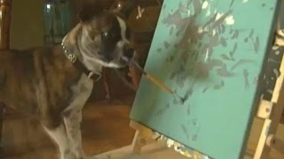 Minnesota Dog: This Painting Pooch Is Being Called The Next Picasso