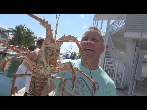 Swifty Lobster Adventures (key west vacation)