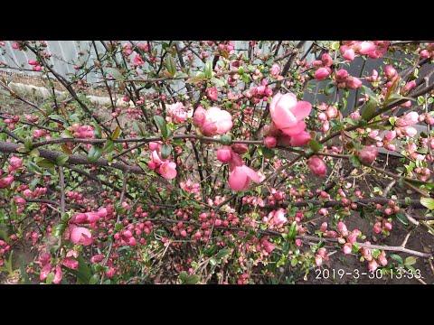30 марта. Погода. Что у нас растет. Наш участок весной в Краснодаре.  Переезд в Краснодар на ПМЖ.