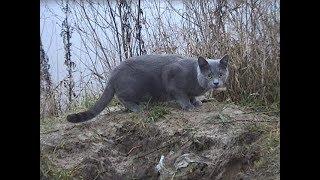 Кот Васька и кот Джим.