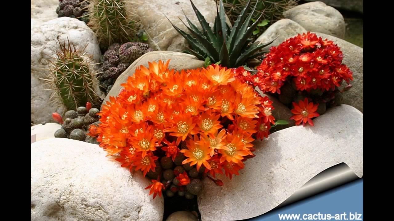 garden ideas cactus rock