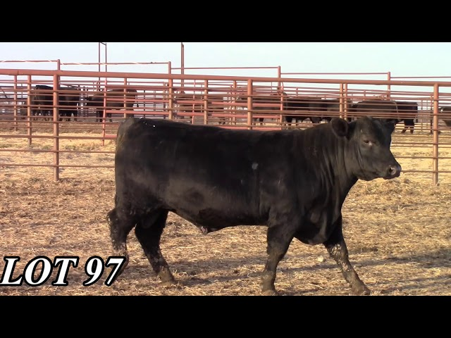 Mead Angus Farms Lot 97