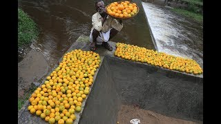 Orange juice prepared for under Middle class Relations / DADDY / ARUMUGAM/ Village food factory