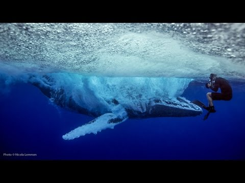 UNSEEN: Whale breach nearly misses swimmer