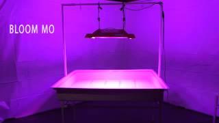 California Light Works Solar Storm 880w LED Grow Light 2015 Review