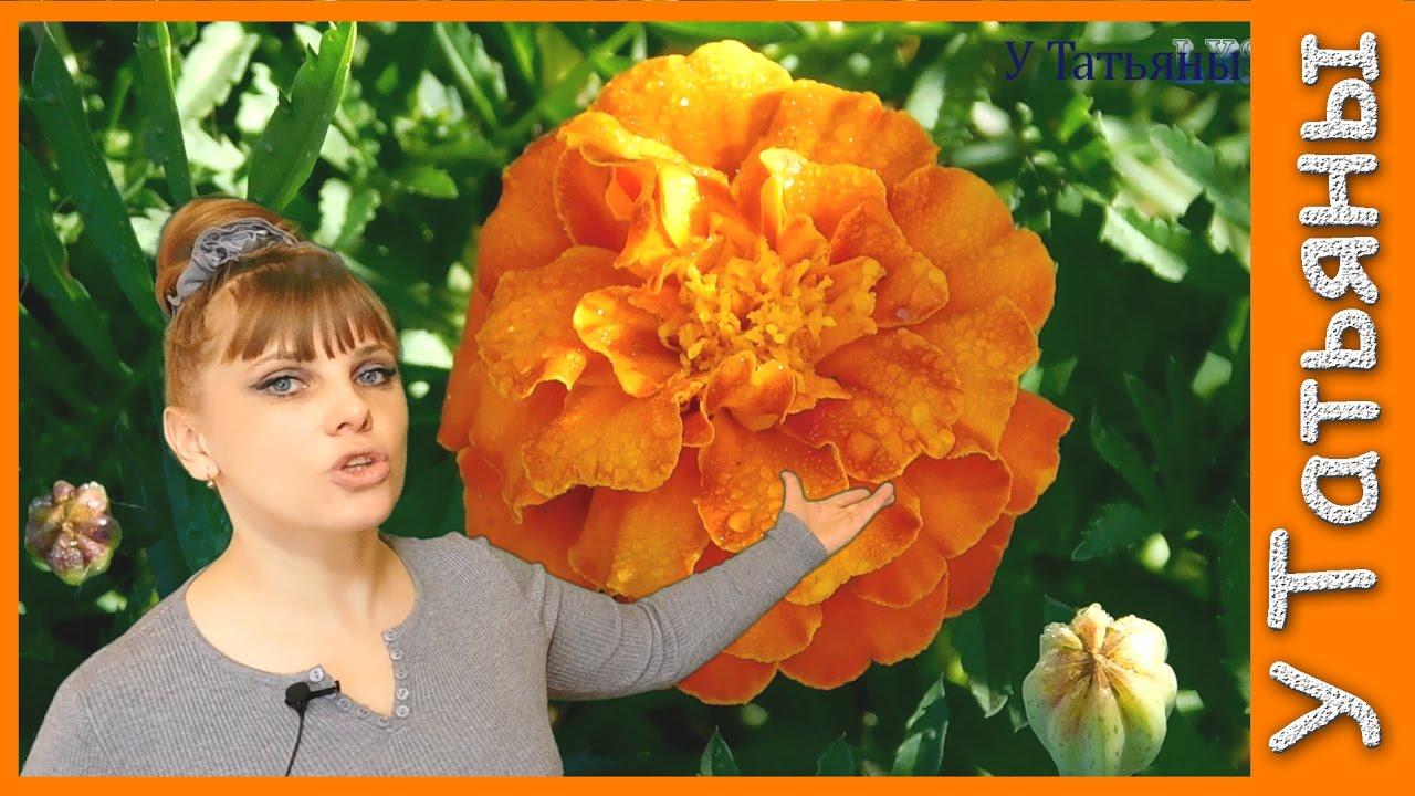 Какие цветы сажать в подмосковье 69