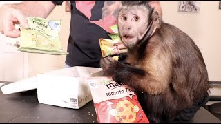 Capuchin MonkeyBoo UnBoxes Mail! Thailand the UK and More!