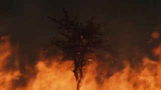 Devastating Wildfires on the Savannah - The Great Rift: Africa's Wild Heart - BBC