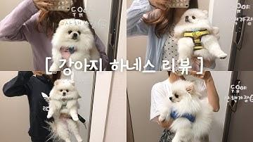 강아지 하네스 하울,가슴띠 리뷰(feat.내돈내산)🐹💕