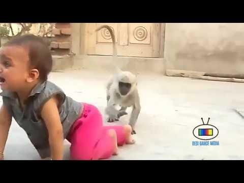 القرد المضحك مع طفل صغير  Funny Monkey and Child